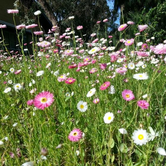 150115 Flowers